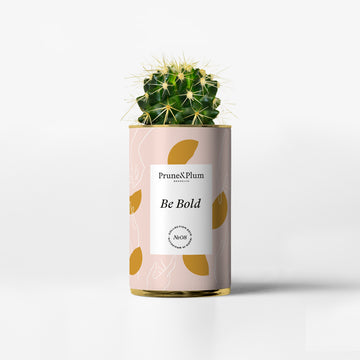 Indoor Planters - Cactus Pot on the theme of Be Bold- Prune & Plum