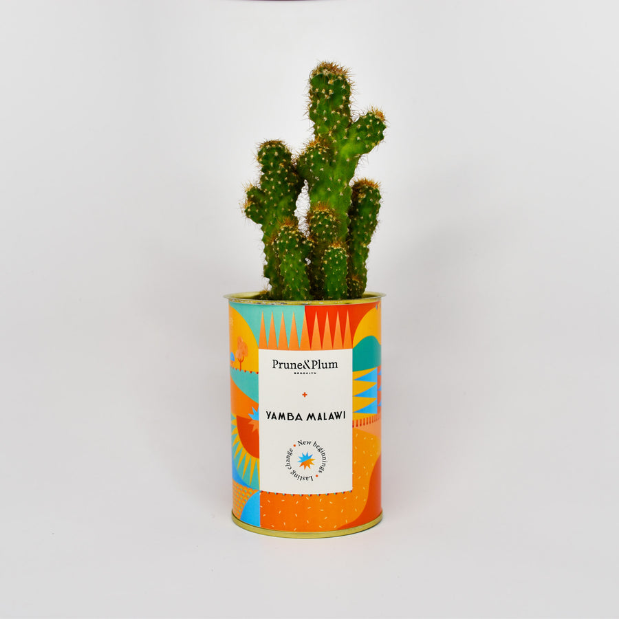 Indoor Planters - Cactus Pot or Succulent Pot on the theme of