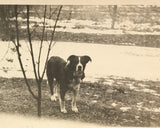 A Country Dog - Real Vintage Photo Snapshot of a Sweet Farm Dog on a Rural Winter Day - 1950s Found Pet Photograph / Vernacular Photography
