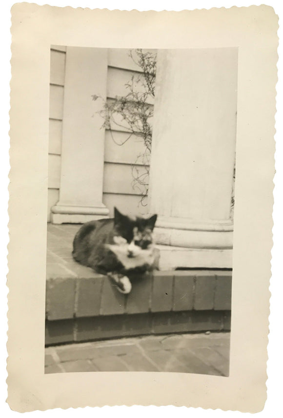 Spooky Kitty Snapshot - Real Vintage Black & White Out of Focus Photo of a Creepy Cat - Original Found Photograph / Vernacular Photography