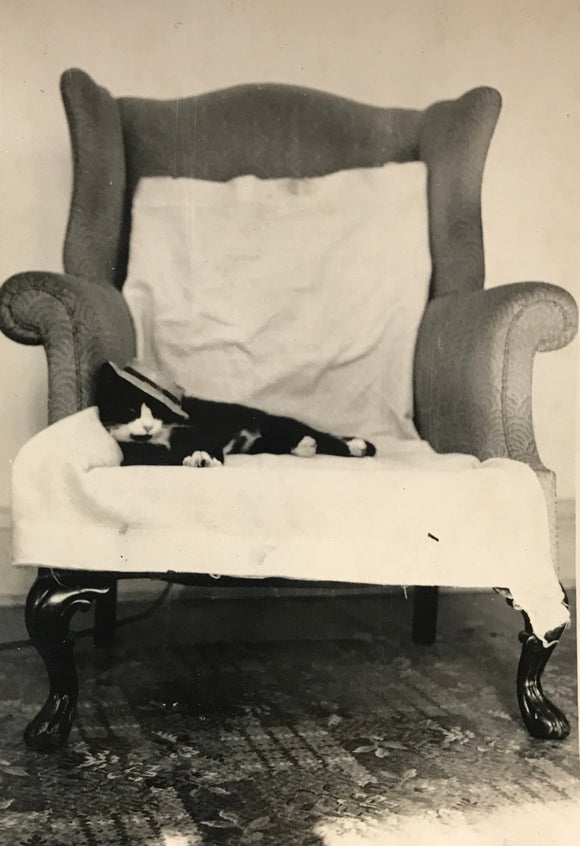 One Hip Cat - Real Vintage Snapshot of Tuxedo Cat in Mini Fedora Hat Posing in Chair - 1950s MCM Found Photograph / Vernacular Photography