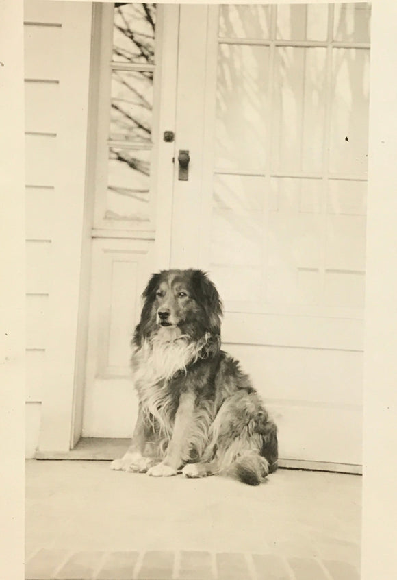 The Dog Days  - Real Vintage Photo Snapshot of a Farm Collie Dog on Front Porch - 1940s Original Found Photograph / Vernacular Photography
