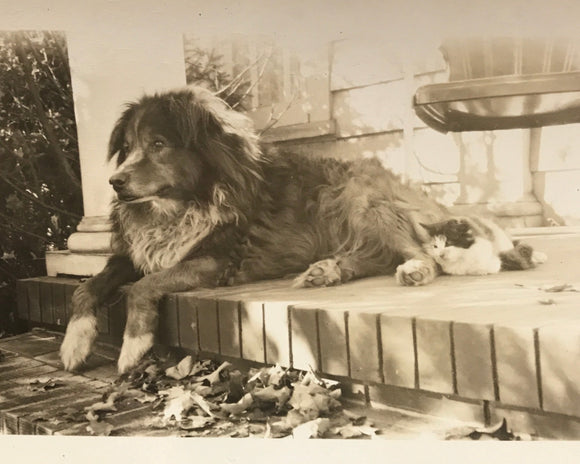 The Best Friends - Real Vintage Photo Snapshot of a Farm Dog & His Cat on the Front Porch - 1950s Found Photograph / Vernacular Photography