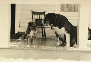 Little Buddy Pup - Real Vintage Photo Snapshot of an Old Farm Dog & Puppy Brother on Porch - 1950s Found Photograph / Vernacular Photography
