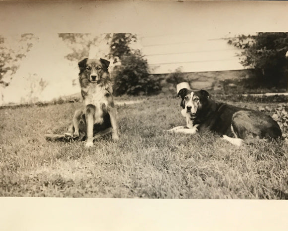 The Furry Fellows - Real Vintage Photo Snapshot of Two Farm Dogs Relaxing in Yard - 1950s Original Pet Photograph / Vernacular Photography