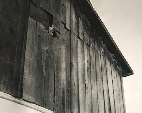 The Great Kitty Escape Real Vintage B&W Photo Snapshot of a Kitten Climbing out a Barn - Original Found Photograph / Vernacular Photography