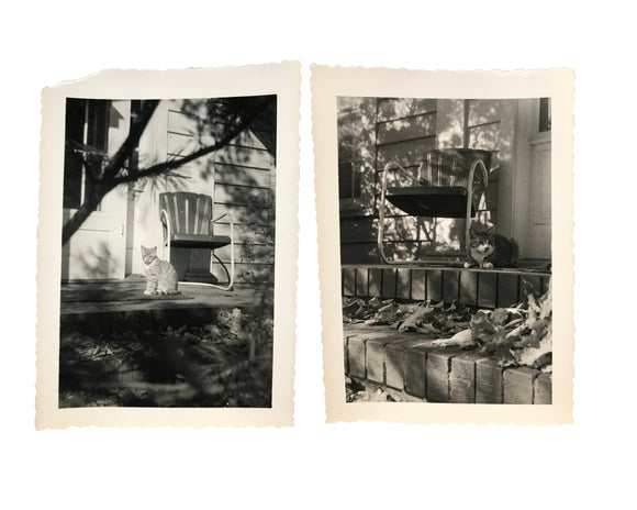Two Country Cat Photos - Real Vintage Black & White Snapshot Set of Cats on a Farmhouse Porch - Original Photograph / Vernacular Photography