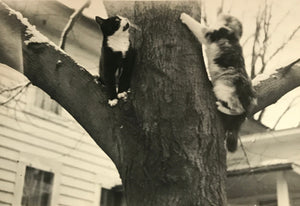 Two Kittens in a Tree Real Vintage Black & White Photo of 2 Kitty Cats on a Winter Day - Original Found Photograph / Vernacular Photography