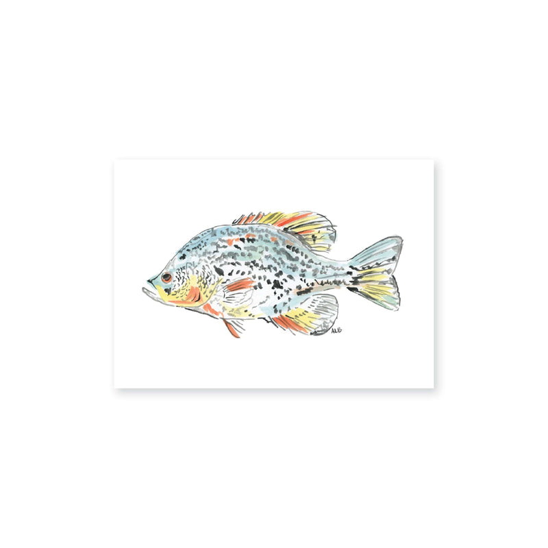 Weezie B. Designs | Watercolor Bream Art Print