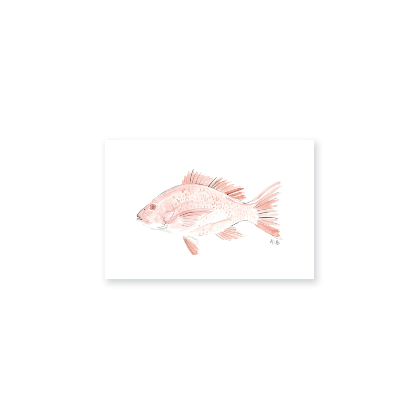 Weezie B. Designs | Watercolor Red Snapper Art Print
