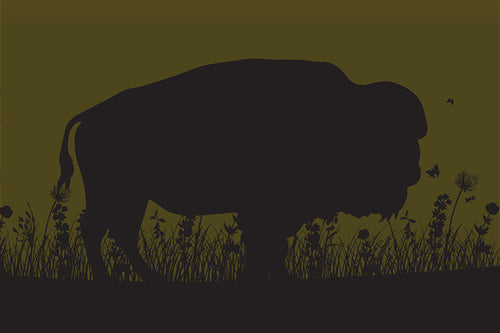 Field Guide 6: Bison