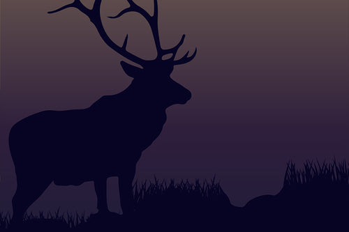 Field Guide 4: Elk