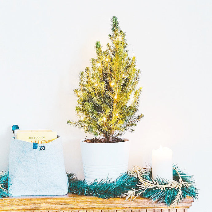The Great Christmas Tree Waste Debate: Real or Fake?