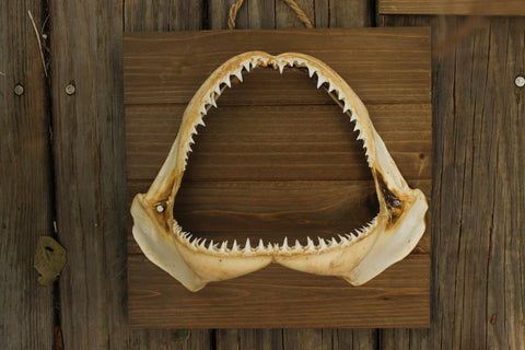 Black Tip Wall Decor