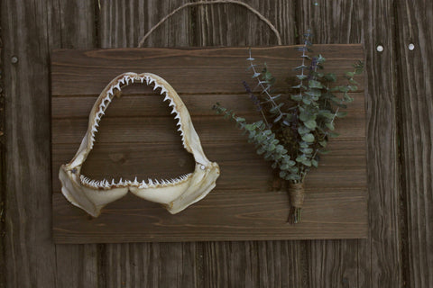 Large Eucalyptus and Black Tip Jaw