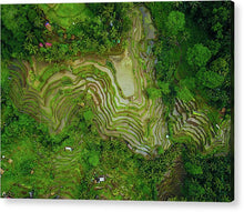 Load image into Gallery viewer, Bali Rice Terrace - Acrylic Print