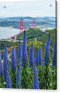 Golden Gate Pride - Acrylic Print