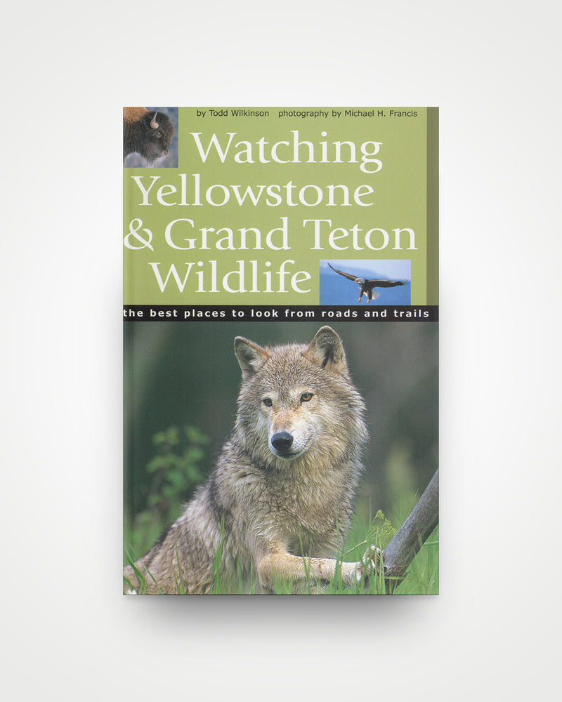 Watching Yellowstone and Grand Teton Wildlife