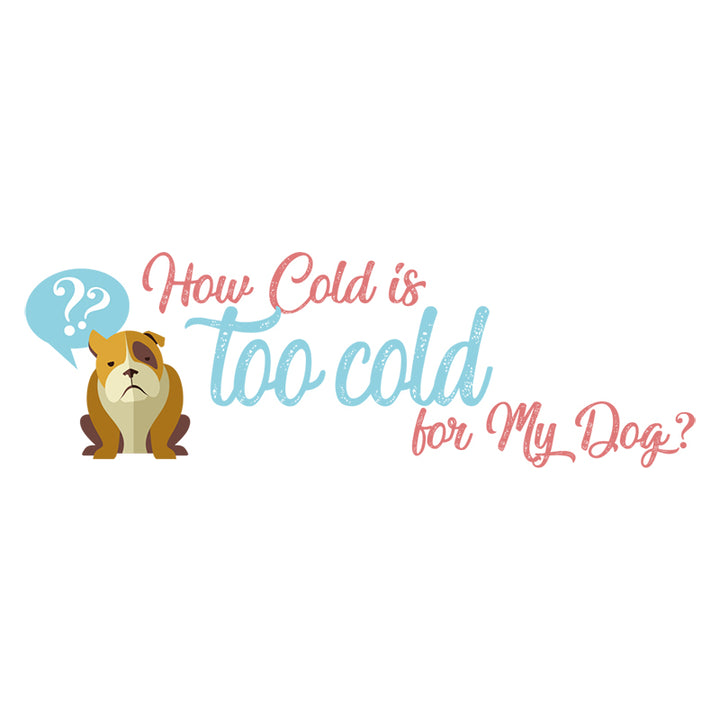 How cold is too cold for my dog?