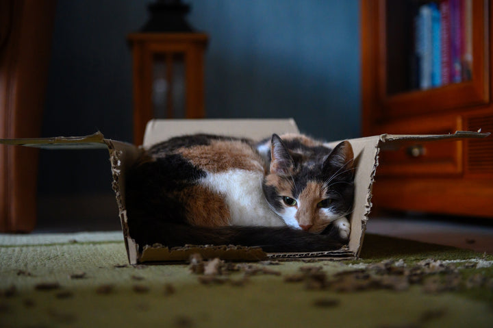 What's with cats and boxes?