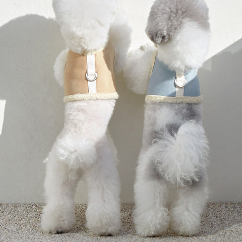 How to put on a puppy harness in 3 easy steps