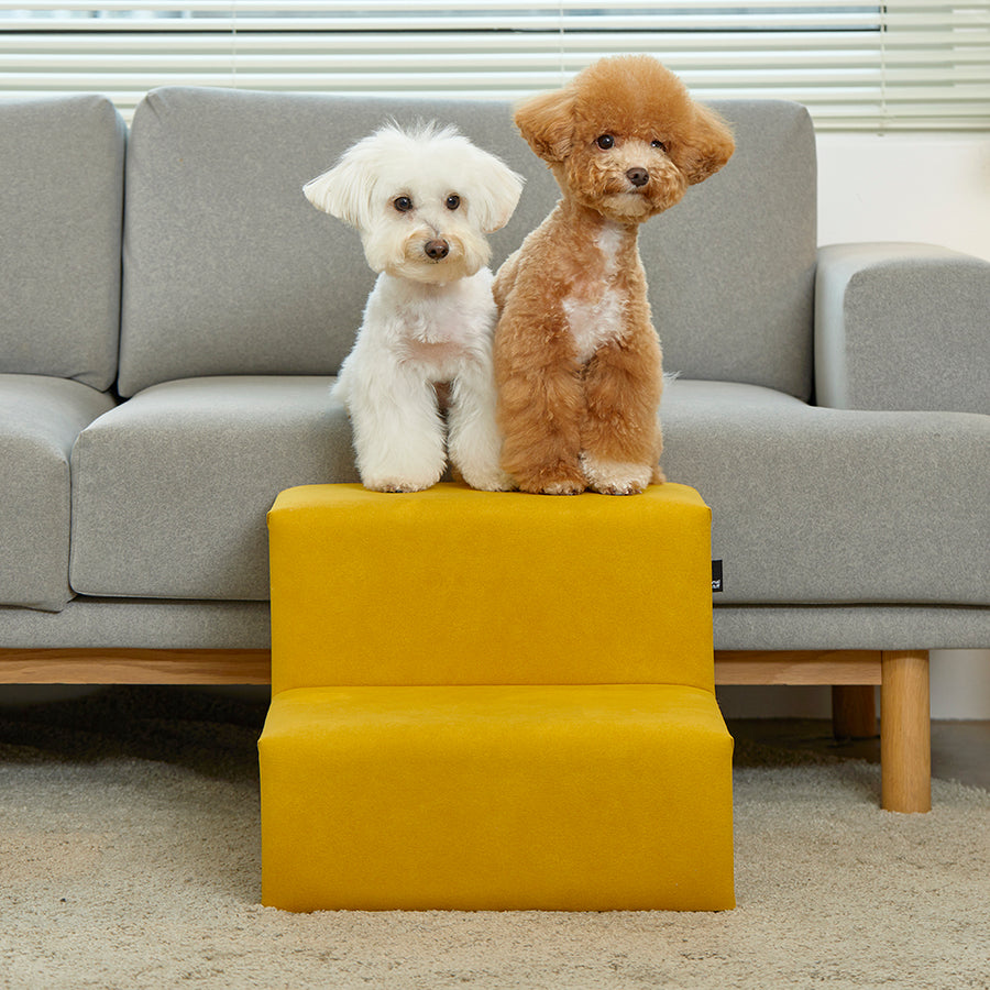 two dogs with modern dog stairs