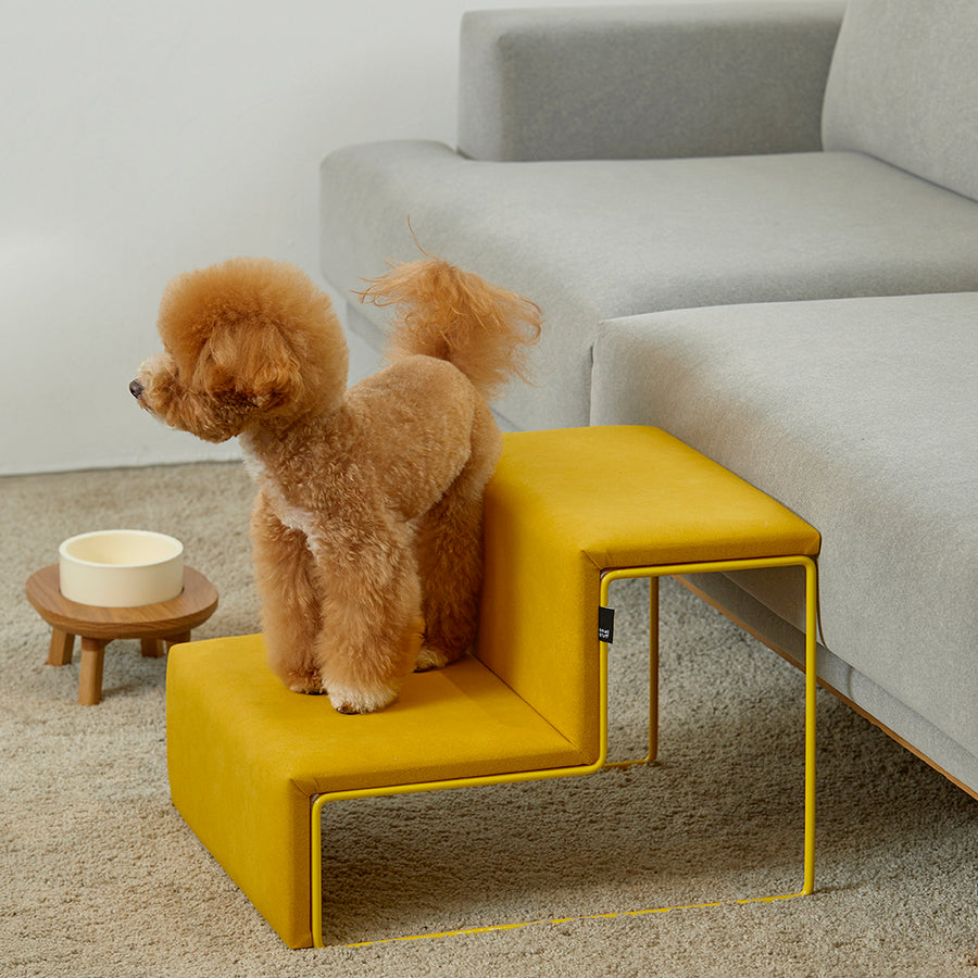 toy poodle with contemporary dog stairs