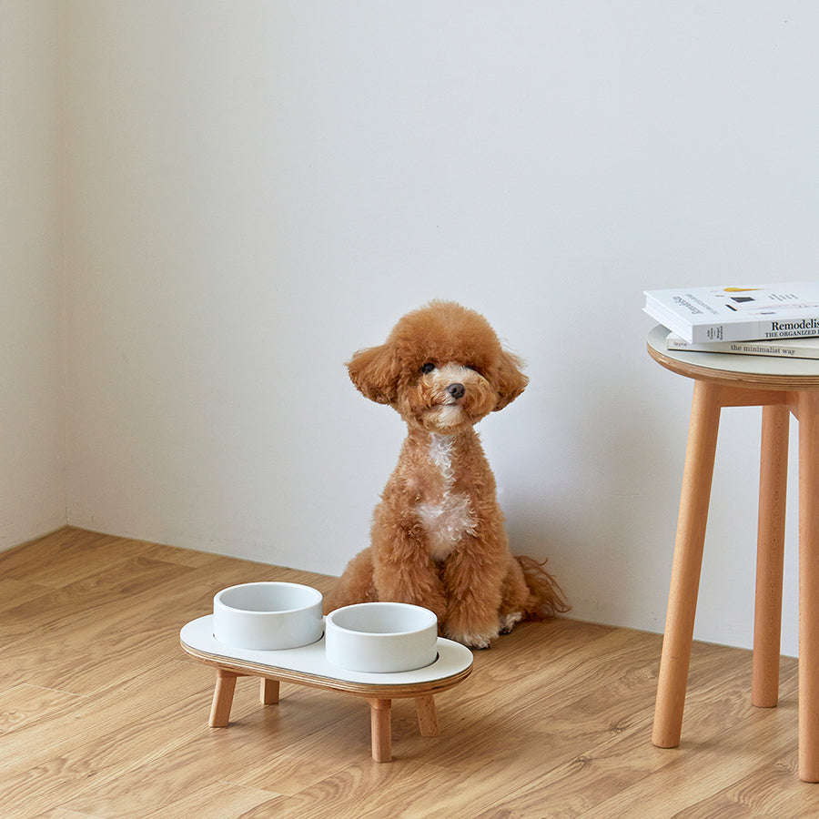 toy poodle with raised dog bowls