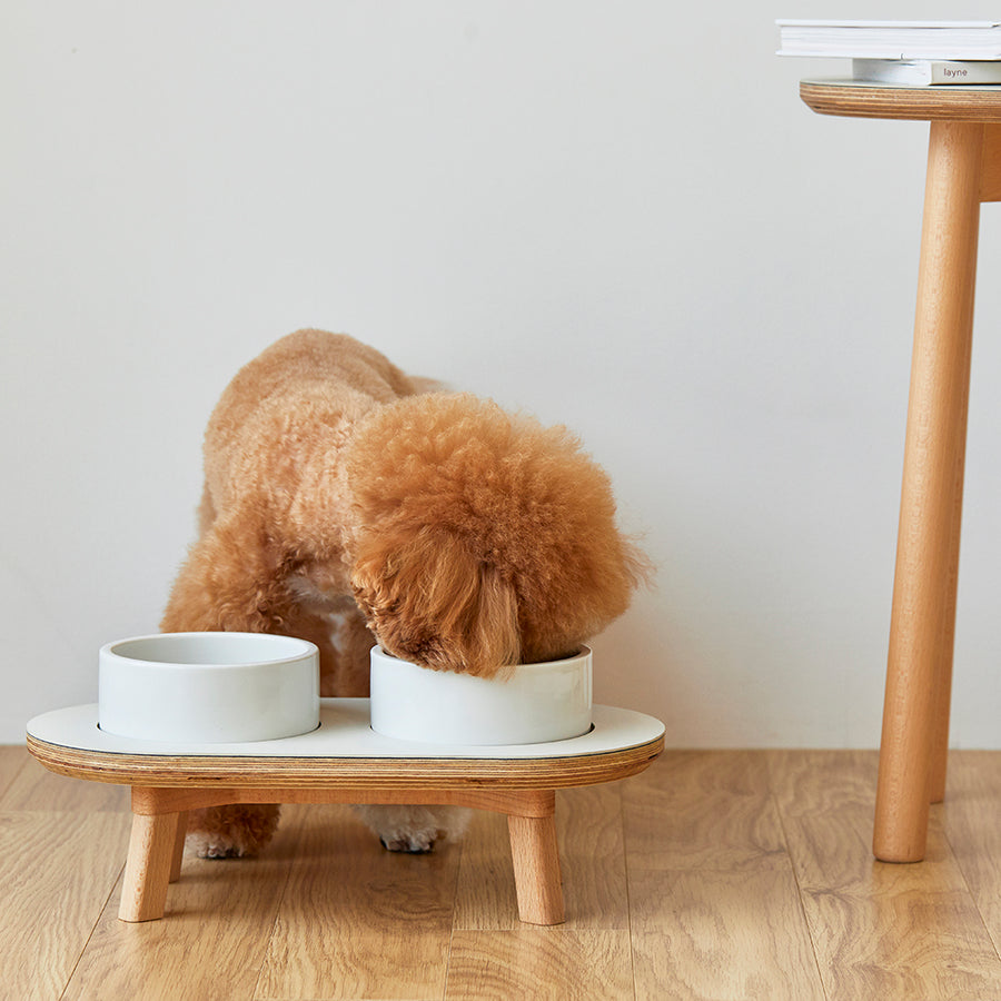 toy poodle eating out of raised dog bowls