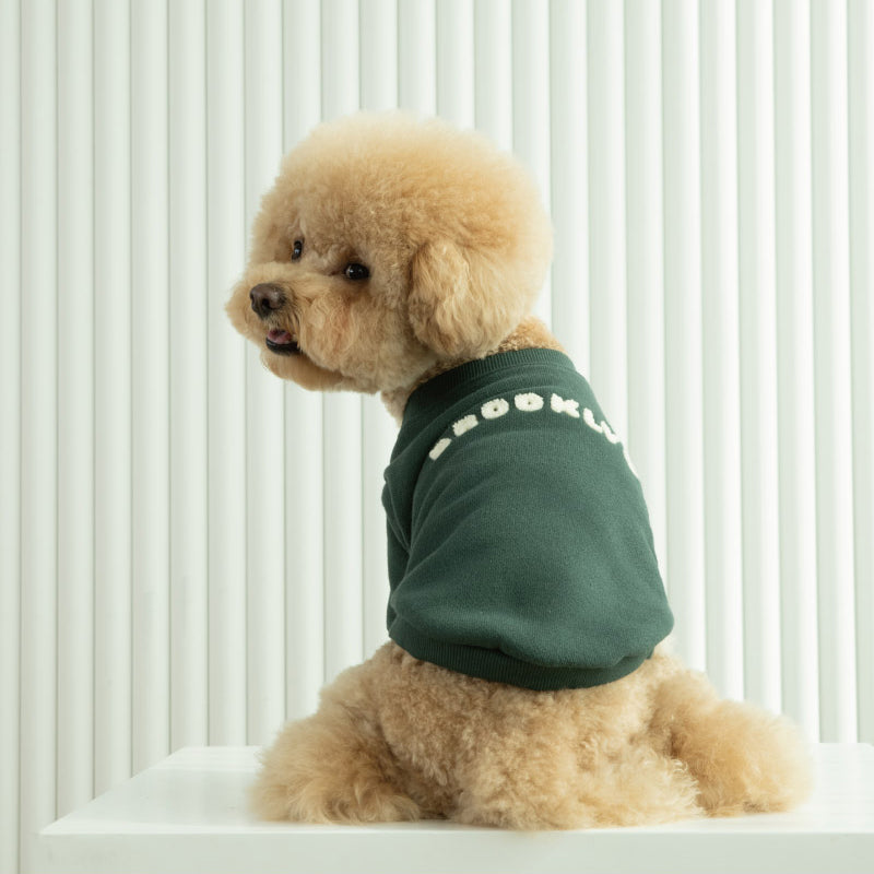poodle wearing Brooklyn sweatshirt