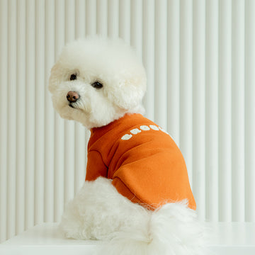 Bichon fries wearing Brooklyn sweatshirt in Baked Orange