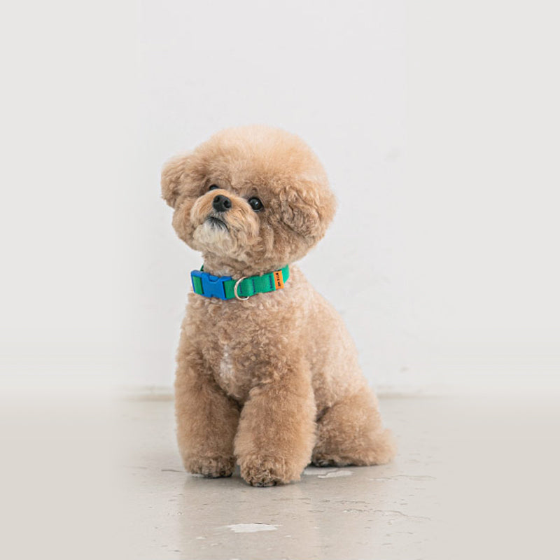 toy poodle wearing Candy Crayon Dog Collar in green