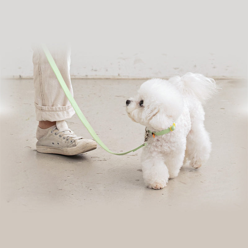 bichon wearing candy crayon collar and leash set in light green