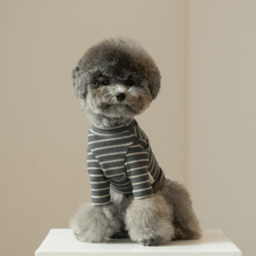 Poodle wearing Daily Stripe dog tee