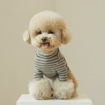 Poodle wearing Daily Stripe tee