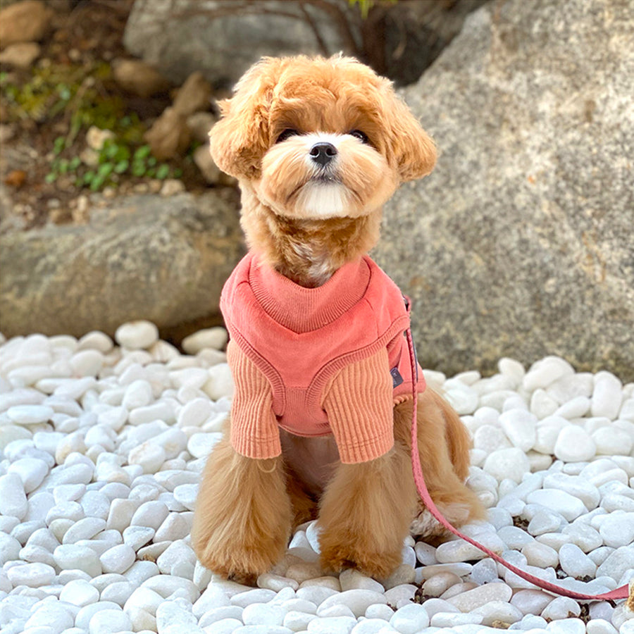 small dog lightly fuzzy fleece corduroy top layered with vest