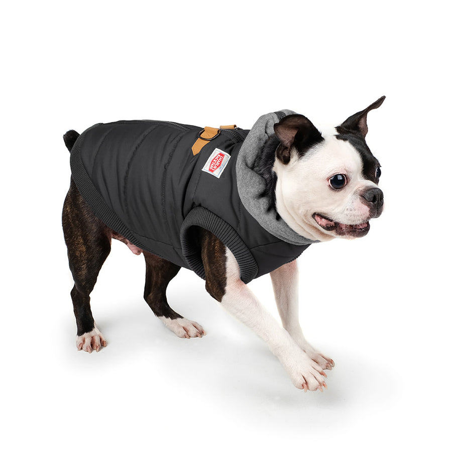 Boston terrier wearing Charlie's Backyard Harness vest for dogs with fleece lining