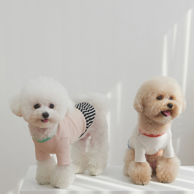 puppy wearing cute playful tee for dogs