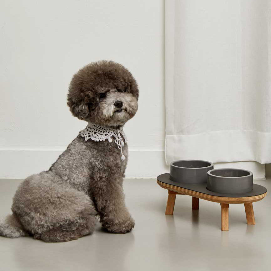 toy poodle with wood elevated dining set for the modern dog & cat