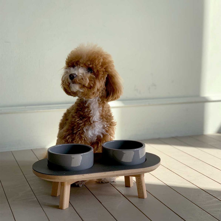 cavadoodle with wood elevated dining set for the modern dog & cat