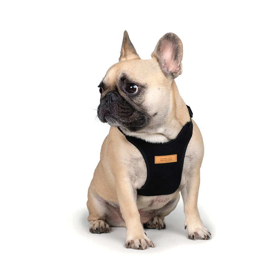 french bulldog wearing Charlie's backyard comfort harness
