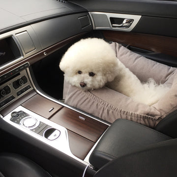 Bichon inside car seat for dogs