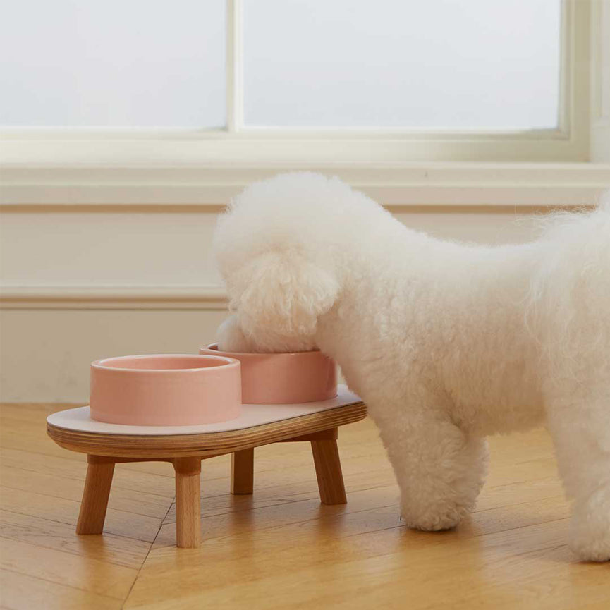Bichon frise with wood elevated dining set for the modern dog & cat