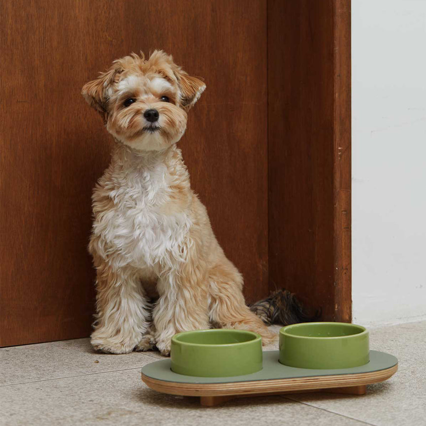 mini doodle with wood elevated dining set for the modern dog & cat