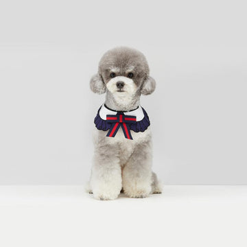 Grey Toy Poodle wearing GGucci Cape in Sailor Navy