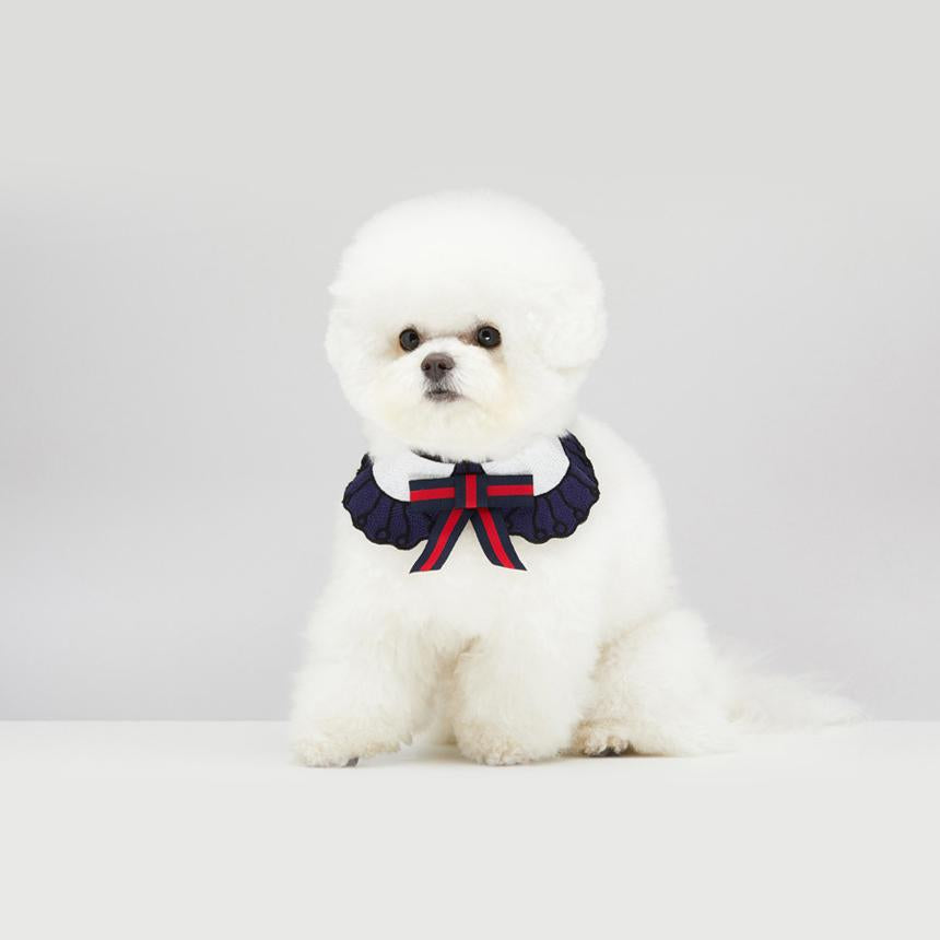 Bichon Frise wearing GGucci Cape in Sailor Navy