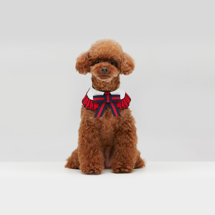 Red Toy Poodle wearing our GGucci Cape in Cherry Red