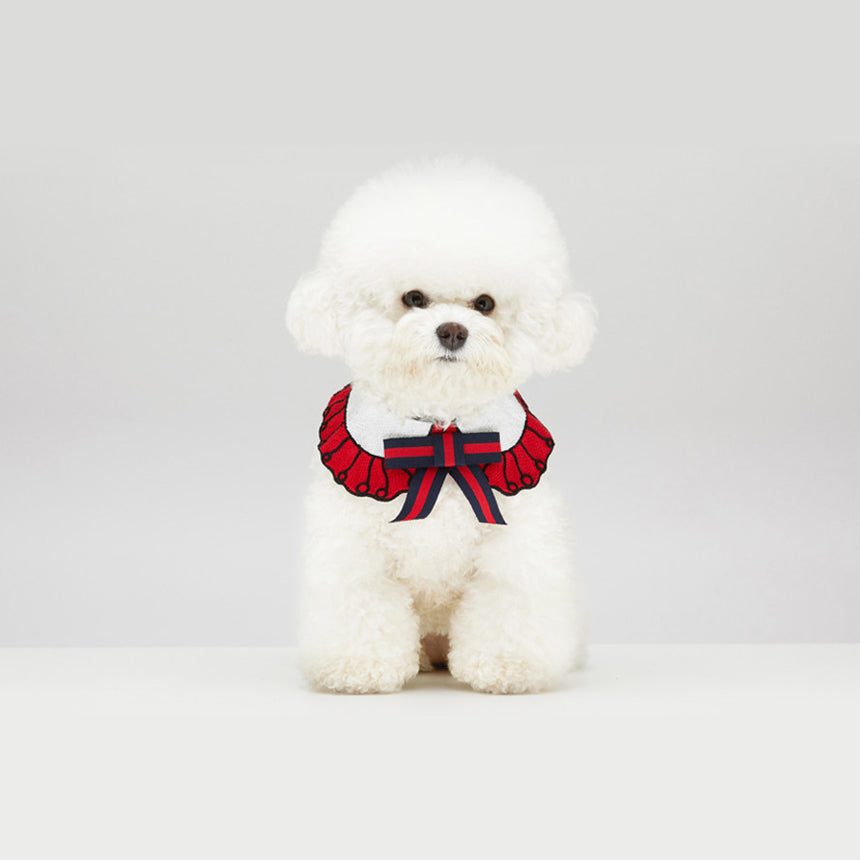 Bichon Frise Dog wearing GGucci Cape in Cherry Red