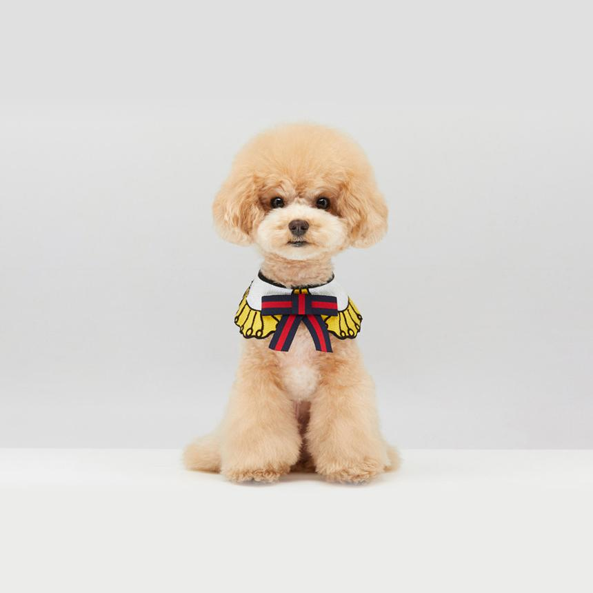 Toy Poodle wearing GGucci Dog Cape in Yellow