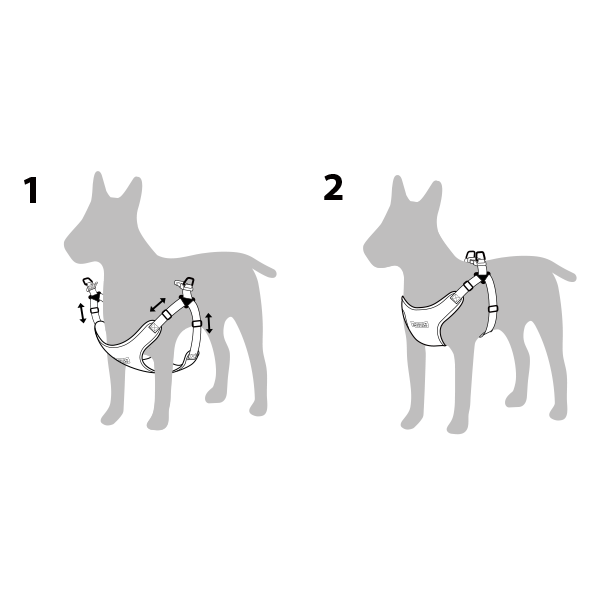 How to put on a harness on your dog
